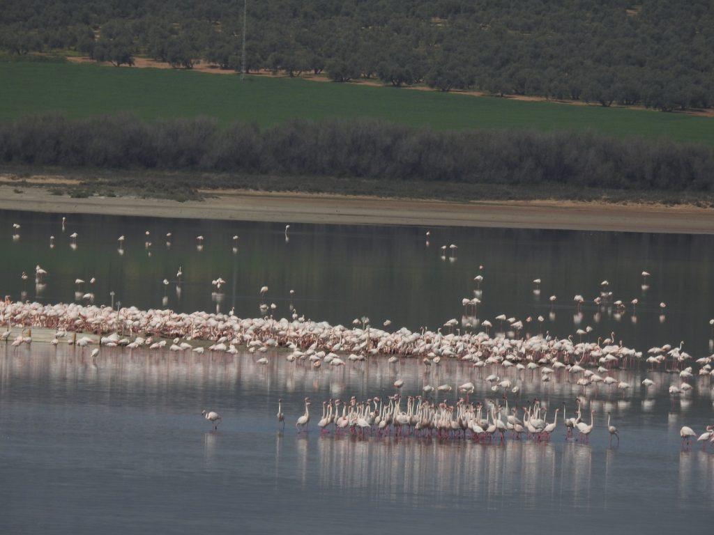 """Résultat de recherche d'images pour """"laguna lagunillas flamencos"""""""